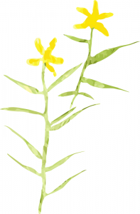 Illustration of Water Stargrass